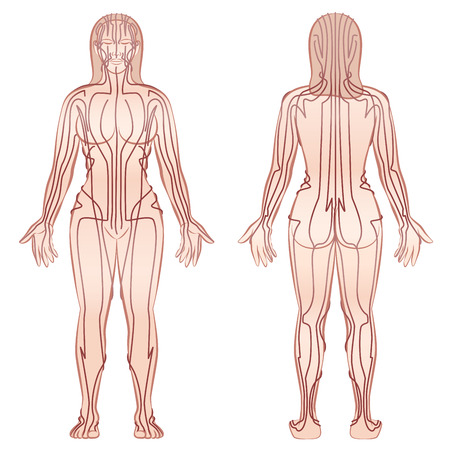 qi: Meridian - meditating woman with main acupuncture meridian - front view, back view - Isolated vector illustration on white background.