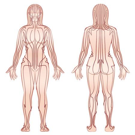 Meridian - meditando mujer con principal meridiano de acupuntura - vista frontal, vista posterior - ilustración vectorial aislado sobre fondo blanco.