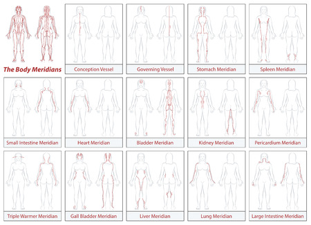 Body meridian chart - female body - schematic diagram with main acupuncture meridian and Their directions of flow. 矢量图像
