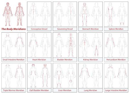 Tableau méridien du corps - corps féminin - schéma avec principal méridien d'acupuncture et leurs directions d'écoulement.