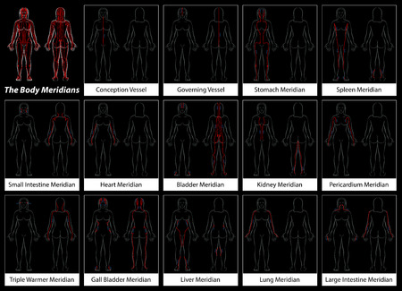 woman vector: Body meridian of a woman - Detailed diagram with main acupuncture meridian, anterior and posterior view. Isolated vector illustration on black background.