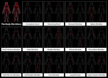 Körper Meridian einer Frau - Detaillierte Diagramm mit Hauptakupunktur Meridian, anterior und posterior Ansicht. Isolierte Vektor-Illustration auf schwarzem Hintergrund.