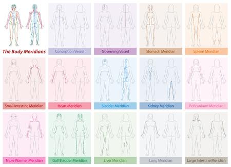 Graphique du méridien du corps du corps de la femme - avec des noms et des couleurs différentes - Médecine traditionnelle chinoise. Illustration vectorielle isolée sur fond blanc.