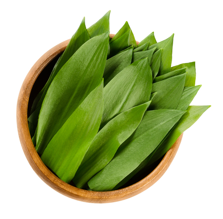 wild asia: Ramsons in wooden bowl. Fresh leaves of Allium ursinum, also called buckrams, wild garlic or bear leek. Wild relative of chives native to Europe and Asia. Macro food photo close up on white background Stock Photo