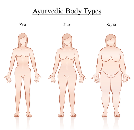 frontal view: Body constitution types - ayurvedic typology - vata, pitta, kapha. Isolated outline vector illustration of female body - frontal view - different anatomy. Illustration