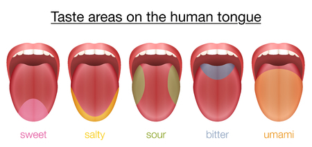 Taste areas of the human tongue - sweet, salty, sour, bitter and umami - with colored regions of the appropriate taste buds. Stock Vector - 77028460