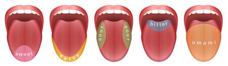 Zunge mit fünf Geschmacksknospen - süß, salzig, sauer, bitter und umami. Isolierte Vektor-Illustration auf weißem Hintergrund. Vektorgrafik