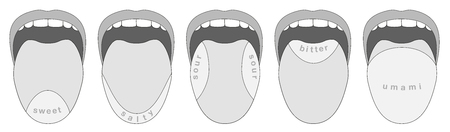 glutamate: Taste buds areas of the human tongue - sweet, salty, sour, bitter, umami - isolated grayscale vector illustration on white background.