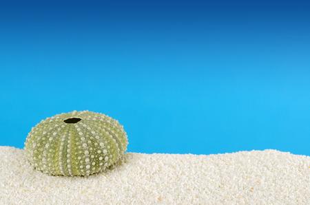 파란색 배경의 하얀 모래에 녹색 바다 성 게 껍질. Urchin, 또한 바다 고슴도치, 구형 내골과 테스트,라는. Psammechinus miliaris 지중해에서. 매크로 사진입니