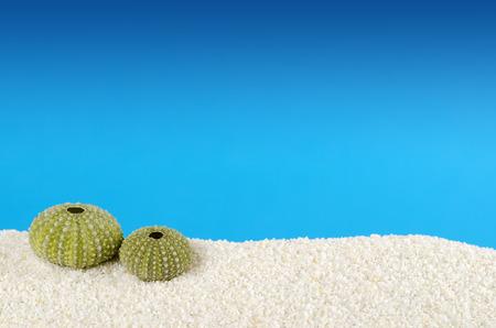 파란색 배경의 하얀 모래에 두 녹색 바다 성 게 껍질. Urchins, 또한 바다 고슴도치, 구형 내골 골격과 테스트를했다. Psammechinus miliaris 지중해에서. 매크로 스톡 콘텐츠