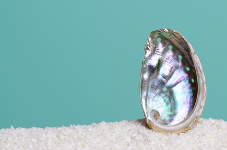 Iridescent abalone shell on white sand on turquoise background. Ormer, Haliotis, sea snail, marine gastropod mollusc. Open spiral structure. Inside nacre surface with respiratory pores. Macro photo. Archivio Fotografico