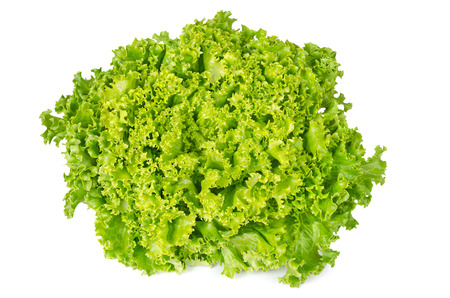 Lollo Bianco lettuce front view on white background. Lollo Bionda, summer crisp variety of Lactuca sativa. Loose-leaf lettuce. Green salad head with frilly leafs and wavy leaf margin. Closeup photo. Stock Photo
