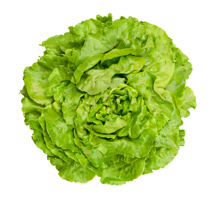 Butterhead lettuce from above. Also Boston or Bibb lettuce. Round lettuce. A green head salad with loose arrangement of leaves. Variety of Lactuca sativa. Closeup photo isolated on white background. 版權商用圖片