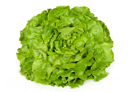 lactuca: Butterhead lettuce front view. Also Boston or Bibb lettuce. Round lettuce. A green head salad with loose arrangement of leaves. Variety of Lactuca sativa. Closeup photo on white background.