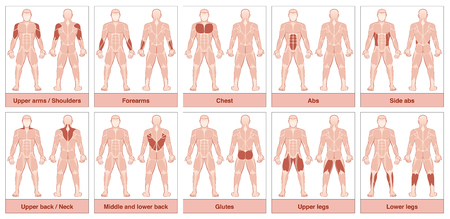 Muscle group chart - male body with the largest human muscles, divided into ten labeled cards with names and appropriate highlighted muscle groups - isolated vector illustration on white background.