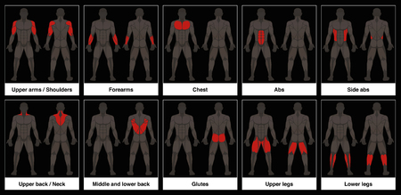 Muscle chart - male body, frontal and back view with highlighted red muscle parts - isolated vector illustration on black background.