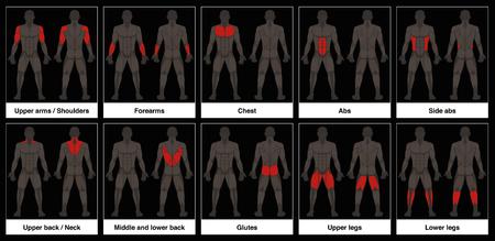 Spierkaart - Mannelijk lichaam, voor- en achteraanzicht met gemarkeerde rode spierdelen - Geïsoleerde vectorillustratie op zwarte achtergrond.