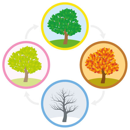 Tree throughout the course of a year with different foliage in typical colors and shades - spring, summer, autumn and winter arranged in a circle. Vector illustration. Stock Vector - 83320591