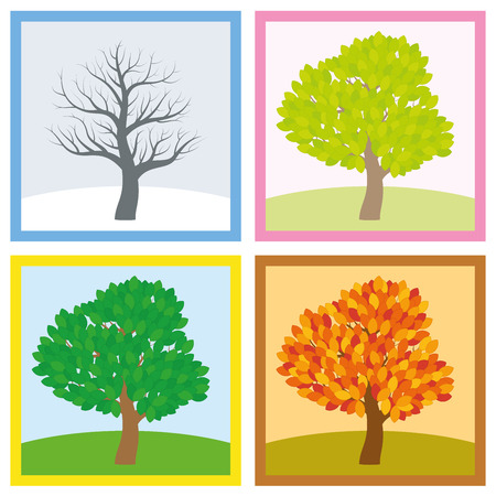 Tree in winter, spring, summer and fall with different foliage in typical colors and shades while the leaves turn throughout the course of a year. Vector illustration.