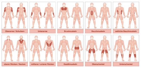Muscle chart with german names - male body with the largest human muscles, divided into ten labeled cards with names and appropriate highlighted muscle groups