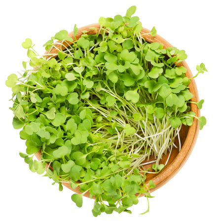 Rocket salad sprouts in wooden bowl. Leaves and cotyledons of Eruca sativa, also arugula, rucola or rugula.Salad vegetable and microgreen. Isolated macro food photo close up from above over white. 版權商用圖片