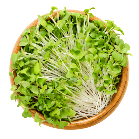 Mizuna sprouts in wooden bowl. Cotyledons of Brassica juncea japonica. Also Japanese mustard greens, kyona or spider mustard. Vegetable. Microgreen. Macro food photo close up from above over white. Stockfoto