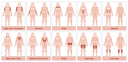 Muscle group chart - female body with the largest human muscles, divided into ten labeled cards with names and appropriate highlighted muscle groups - isolated vector illustration on white background. Illustration