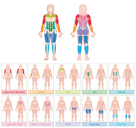 Muscle groups of a female body - chart with largest muscles - ten colored labeled cards - isolated vector illustration on white background.