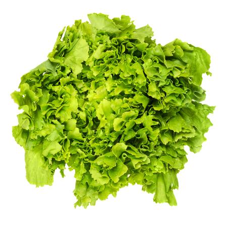 Escarole endive from above over white. Leaf vegetable and lettuce with broad, bitter leaves. Cichorium endivia var latifolia. Green salad head. Bavarian or Batavian endive, grumolo or scarola. Photo.