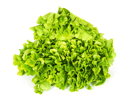 Escarole endive front view over white. Leaf vegetable and lettuce with broad, bitter leaves. Cichorium endivia var latifolia. Green salad head. Bavarian or Batavian endive, grumolo or scarola. Photo. Imagens - 88492033