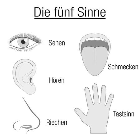 感覚器官の目、耳、舌、鼻と手と適切な指定視力、聴覚、味、嗅覚、ドイツ語で触れる五感チャート。  イラスト・ベクター素材
