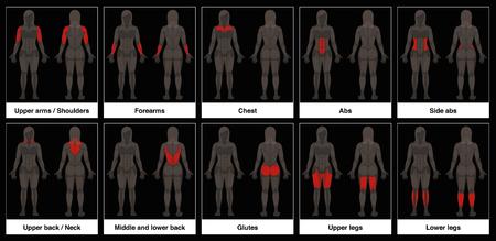 筋肉チャート - 女性の体、強調表示された赤い筋肉の部分と正面と背面のビュー - 黒の背景に孤立ベクトルイラスト。