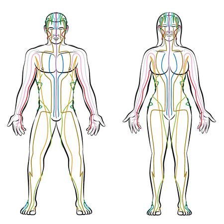 Meridiaan systeem, gekleurde meridianen van mannelijk en vrouwelijk lichaam alternatieve therapie tcm behandeling info afbeelding.