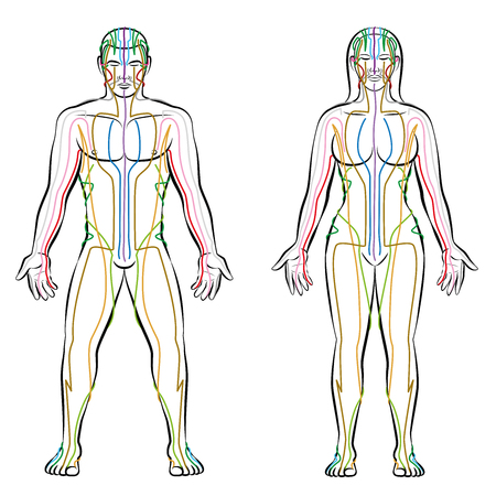 Meridian system, colored meridians of male and female body alternative therapy tcm treatment info graphic. Illustration