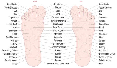Foot reflexology zone massage chart with areas and names of the corresponding internal organs and body parts - skin color - vector illustration on white background.