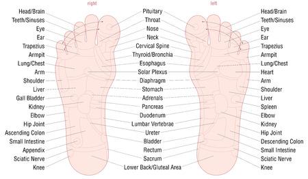 Carta da massagem da zona da reflexologia do pé com áreas e nomes dos órgãos internos e partes do corpo correspondentes - cor da pele - vector a ilustração no fundo branco.