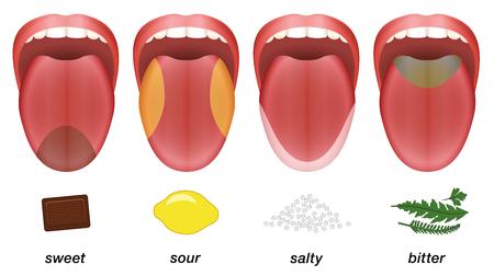 Goûtez les zones de la langue humaine - douce, acide, salée et amère, représentées par le chocolat, le citron, le sel et les herbes.
