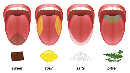 Taste areas of the human tongue - sweet, sour, salty and bitter represented by chocolate, lemon, salt and herbs.