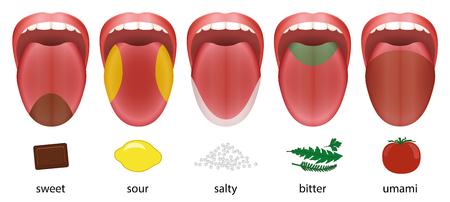 Zunge mit fünf Geschmacksbereichen süß, sauer, salzig, bitter und umami, dargestellt durch Schokolade, Zitrone, Salz, Kräuter und Tomate.
