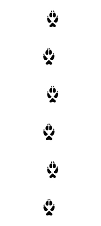 Fox tracks, running in a typical straight line - isolated black icon vector illustration on white background. Ilustração