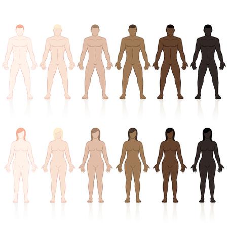 Cuerpos masculinos y femeninos con diferentes tipos de piel. Muy justo, justo, mediano, oliva, marrón y negro. Ilustración de vector aislado sobre fondo blanco