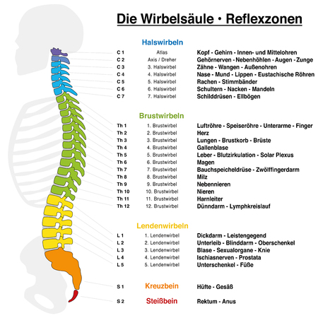 Backbone reflexology chart with accurate description of the corresponding internal organs and body parts, and with names and numbers of the vertebras. GERMAN LANGUAGE.