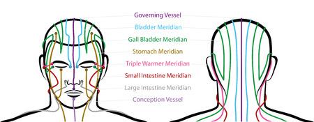 Méridiens de la tête avec points d'acupuncture - vue antérieure et postérieure. Médecine Chinoise Traditionnelle. Illustration vectorielle isolé sur fond blanc. Vecteurs