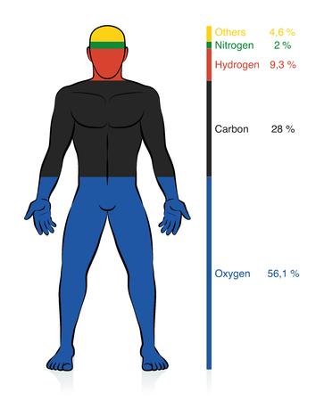 Composizione chimica del corpo umano. Ossigeno, carbonio, idrogeno e azoto, gli elementi chimici organici di base più la percentuale di informazioni sulla massa che compongono un uomo di peso normale. Vettore astratto.