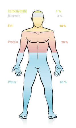 Water, fat, protein, minerals, carbohydrate and percent of mass information. Composition of the main molecules that compose a normal weight man. Illustration of the basic components of the human body.