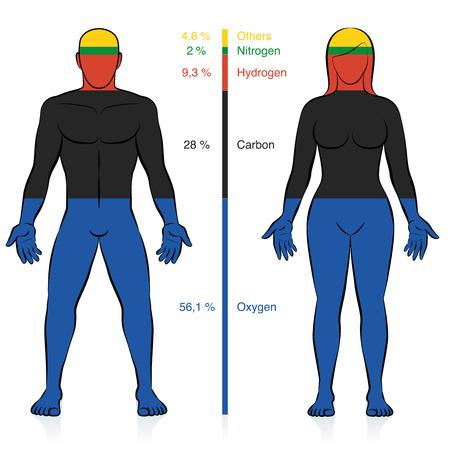 Principali elementi chimici del corpo umano. Ossigeno, carbonio, idrogeno e azoto con percentuale di informazioni sulla massa che compongono un uomo e una donna di peso normale. Vettore astratto. Vettoriali