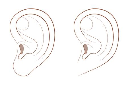 Lóbulo de la oreja libre y lóbulo adjunto en comparación. Apariencia diferente del oído humano debido a la frecuencia de genes recesivos. Ilustración de vector cómico aislado sobre fondo blanco. Ilustración de vector