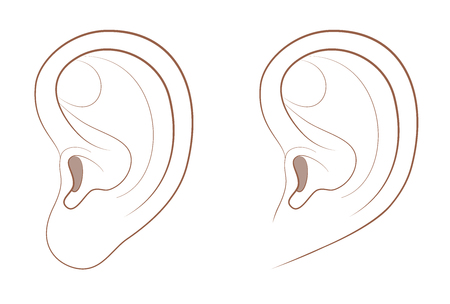 Free earlobe and attached earlobe in comparison. Different appearance of the human ear because of recessive gene frequency. Isolated comic vector illustration on white background.