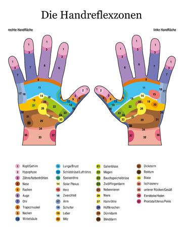 Réflexologie des mains. Langue allemande. Traitement de santé alternatif d'acupression et de physiothérapie. Tableau de massage de zone avec des zones colorées. Numérotation et liste des noms des organes internes et des parties du corps. Vecteurs