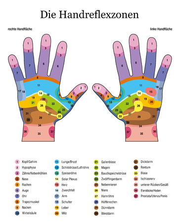Hand reflexology. German language. Alternative acupressure and physiotherapy health treatment. Zone massage chart with colored areas. Numbering and listing of names of internal organs and body parts. Illustration